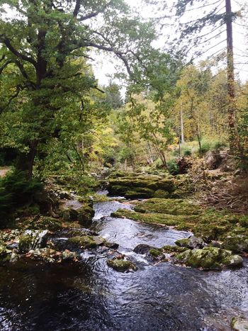 Tollymore Forest Park Belfast Northern Ireland Game Of Thrones Tree Nature Beauty In Nature Tranquility Water Tranquil Scene Forest Scenics Green Color Outdoors Idyllic Rock - Object Travel Destinations Day Growth No People Sky