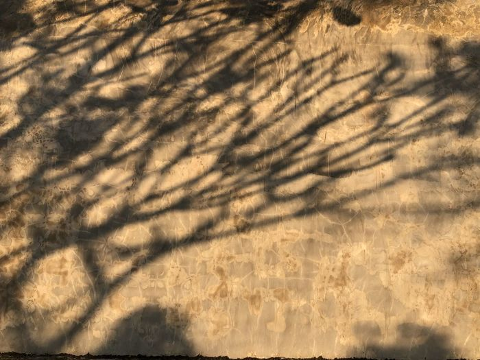 Shadow of tree on plant at sunset