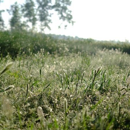 Planting Plants 🌱 Plants Plant Grass Green Green Color
