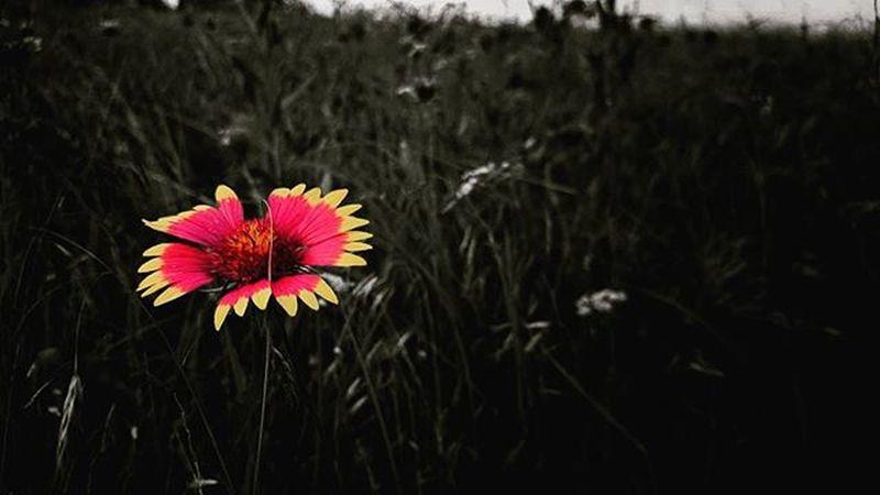 Texas flowers. Midlothiantexas Texas Flowers Grass Nature Home Earth Pretty Beautiful Wildflower Wildflowers Allergy Allergyseason Allergies Note5 Note5camera