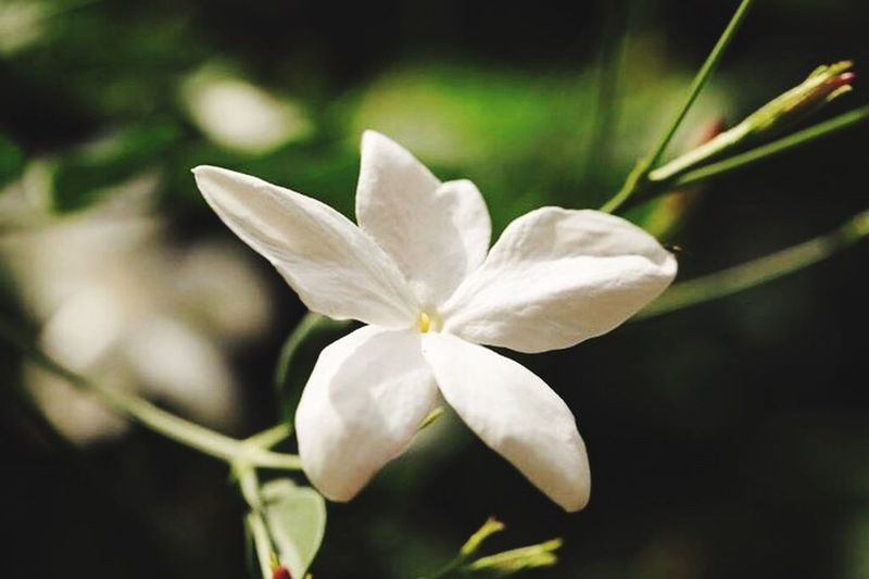 Never Underestimate The Beauty Of Nature Flower Especially Jasmine White Flower Blue Sky ❤️👍🏻🌸