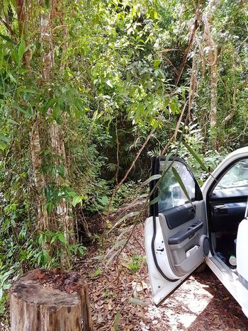 rainforest Australia The City Meets The Forest Car Door Can Go No Further Day Growth Beauty In Nature Rainforest Australia Grass Transportation Land Vehicle Outdoors Tree Car No People Forest Green Color Mode Of Transport Stationary Branch Close-up Nature Plant Stories From The City Go Higher