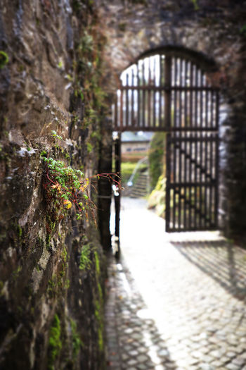 Castle Entry Entryway Gate Nümbrecht Oberberg Plants Schloss Homburg Architecture Built Structure Day Door Flowers Full Length Nature Old Building  Old Buildings Old Door Outdoors Plants And Flowers Selective Focus Stone Wall Stonewall The Way Forward Walking