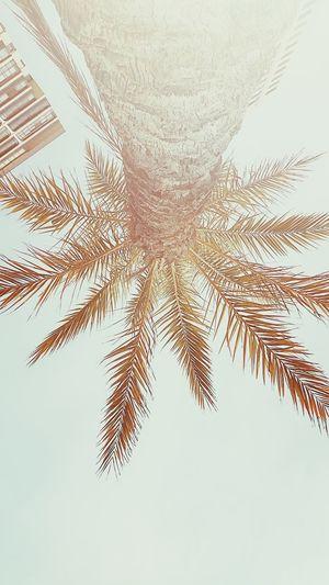having a #Siesta under the #PalmTree Tree Nature