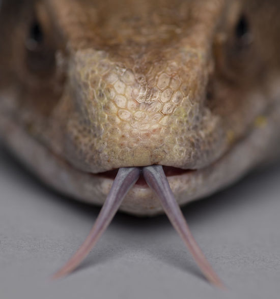 Animal Animal Body Part Animal Eye Animal Head  Animal Mouth Animal Nose Animal Scale Animal Themes Animal Wildlife Animals In Captivity Animals In The Wild Close-up Detail Extreme Close-up Front View Indoors  Lizard No People One Animal Portrait Reptile Selective Focus Still Life Vertebrate