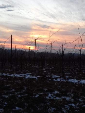 Sunset Cold Temperature Winter Landscape Cloud - Sky Snow No People Agriculture Rural Scene