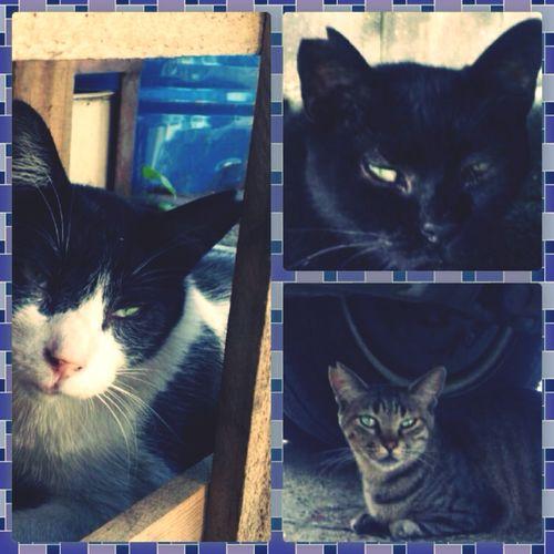 大切な事。 Cats TNR活動 ボランティア Alive