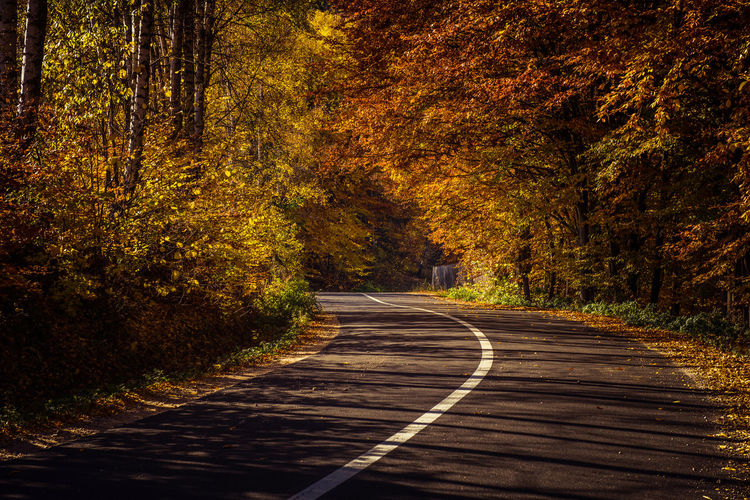 Road passing through forest during autumn