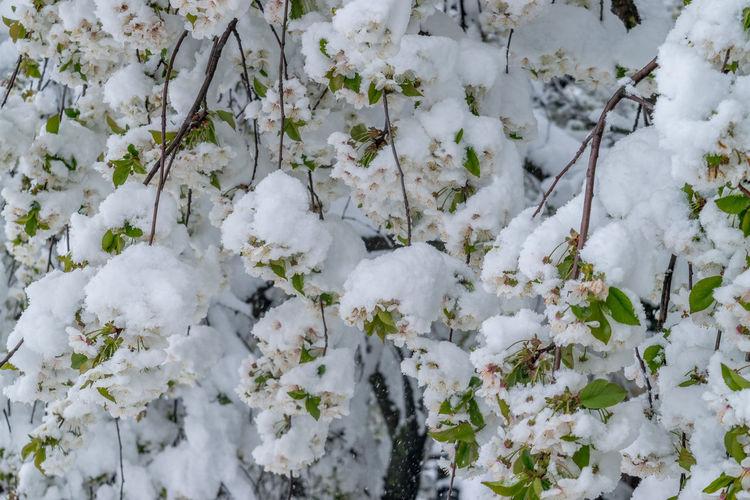Full frame shot of white flowering plants during winter