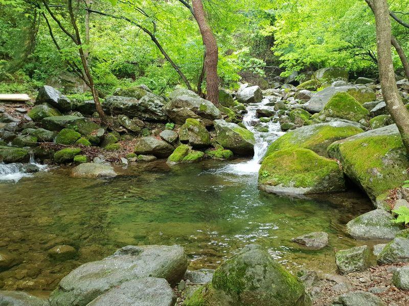Water Rock - Object Green Color Rock Waterfall Stone