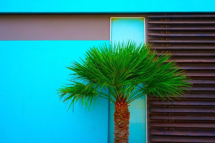 Crete - Greece Travel Vacation Holiday Crete Greece Exterior Design EyeEm Masterclass Eye4photography  Minimalobsession Ladyphotographerofthemonth Torquoise Textures and Surfaces Fine Art Photography Eyeem Architecture Lover Mette Bruus Mettebruus Architecture Minimalism Minimalist Architecture Design Green Color Architecture Built Structure Building Exterior No People Building Wall - Building Feature Growth Palm Tree Tree The Traveler - 2018 EyeEm Awards The Architect - 2018 EyeEm Awards Creative Space #urbanana: The Urban Playground Summer In The City My Best Photo