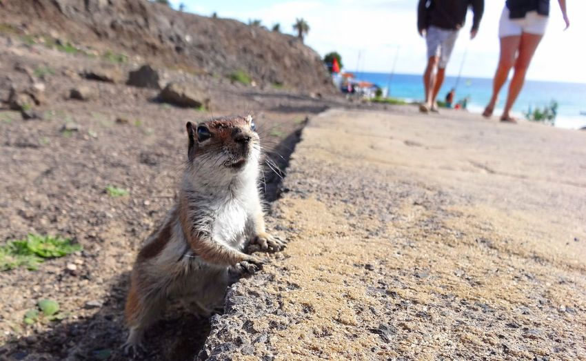 Chipmunk Land Mammal Domestic Animals Pets Domestic Nature EyeEmNewHere One Animal Sand Human Body Part Body Part People Beach Low Section Leisure Activity Outdoors