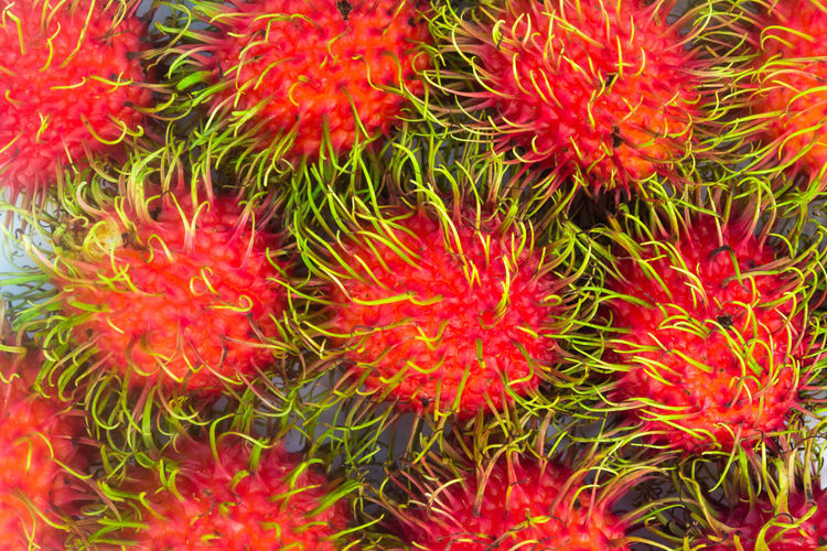 Rambutan group fresh isolated background Isolated Rambutan Background Close-up Colorful; Delicious; Dessert; Freshness Fruit; Group; Health; Healthy; Natural; Fresh; Plant; Organic; Close; Up; Healthy; Health; Diet; Seed; Eat; Detox; Nature; Red Red; Ripe; Red; Grape; Crop; Vineyard; Fruit; Agriculture; Vine; Cabernet; Leaf; Plant; Green; Purple; Bunch; Blue; Cultivated; Nature; Autumn; Food; Wine Sweet; Texture; Thailand; White; Listen; Background; Music; Musical; Gadget; Black; Headset; Modern; Audio; Isolated; Top View; Sound; Cable; Plastic; Earbud; Technology; Equipment; Headphone; Entertainment; Mobile; Earphone; Volume; Device; Electronics; Relaxation