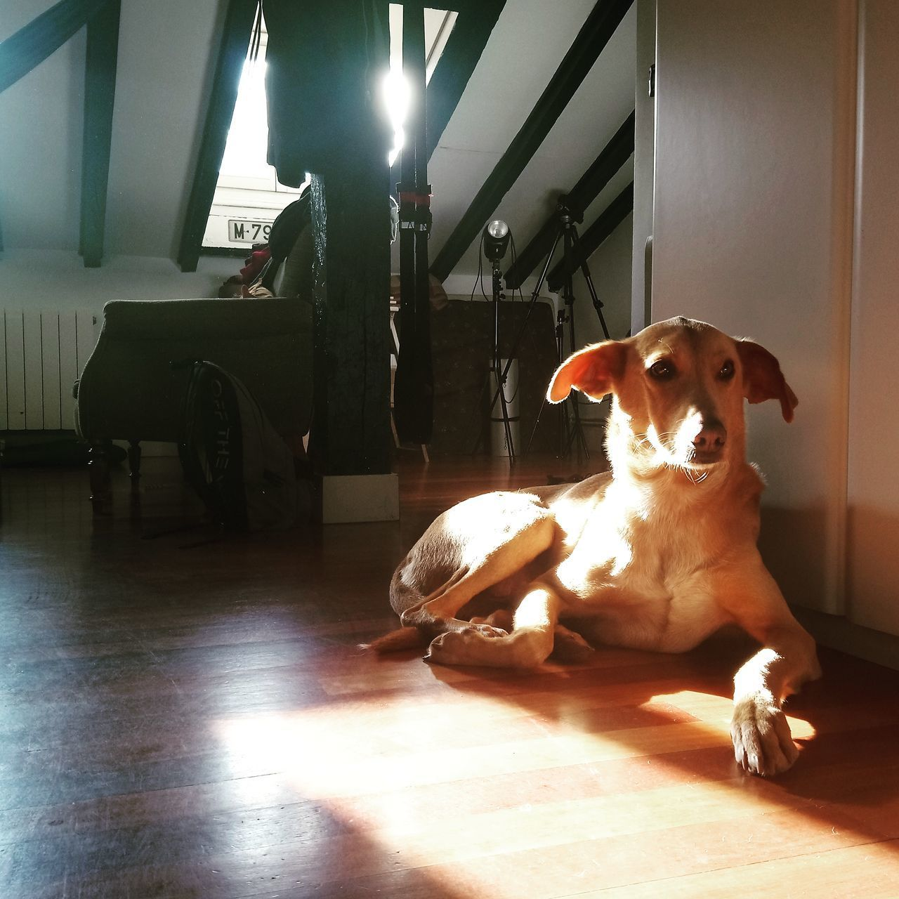 VIEW OF DOG SITTING ON FLOOR