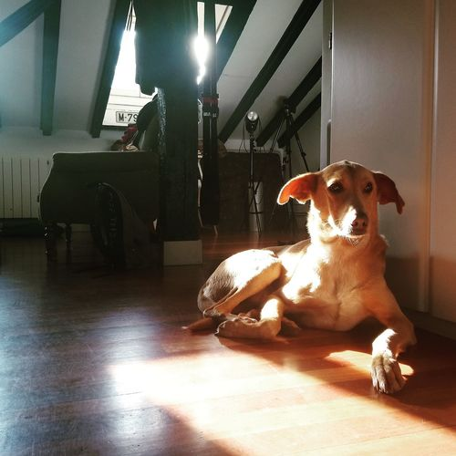 Dog sitting on floor at home