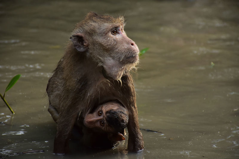 Monkeys Animal Themes Animal Wildlife Animals In The Wild Focus On Foreground Lake Mammal Monkey Nature No People Outdoors Two Animals Water Young Animal