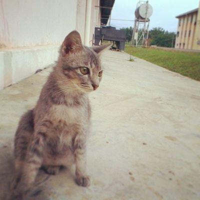 kucing foundri yang menghidupkan hari ini Ikmlumut Foundri