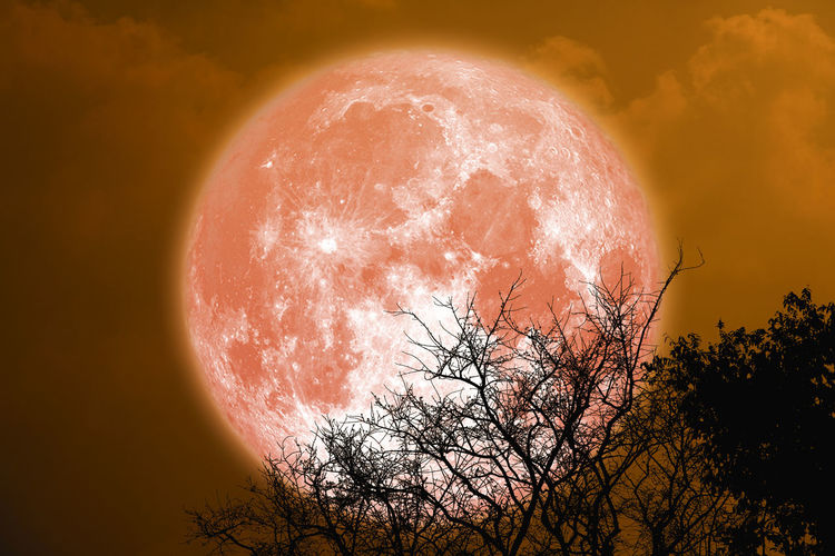Digital composite image of tree against orange sky