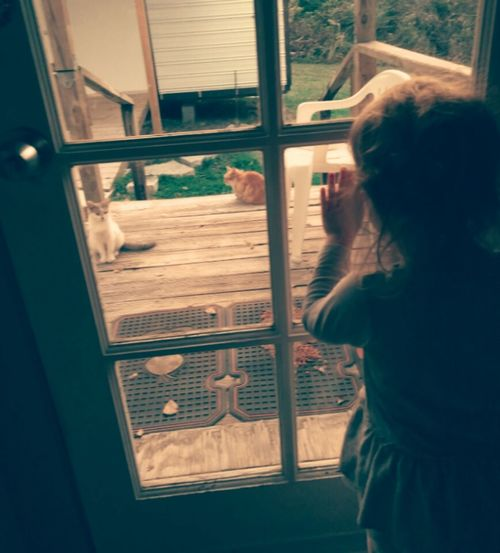 Nolstagic People Children Looking Out The Window Kittens And Mittens Kittens She Wants Out They Want In First Eyeem Photo Family Girls Childhood Animals Lieblingsteil Small Towns Peering Through Long Goodbye TCPM