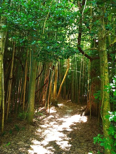 My Favorite Place Forest Tree Tree Trunk WoodLand Bamboo Bamboo Forest Tranquility Nature Growth Scenics Non-urban Scene Beauty In Nature Branch Day Outdoors Abundance Green Color Solitude Woods The Way Forward Footpath