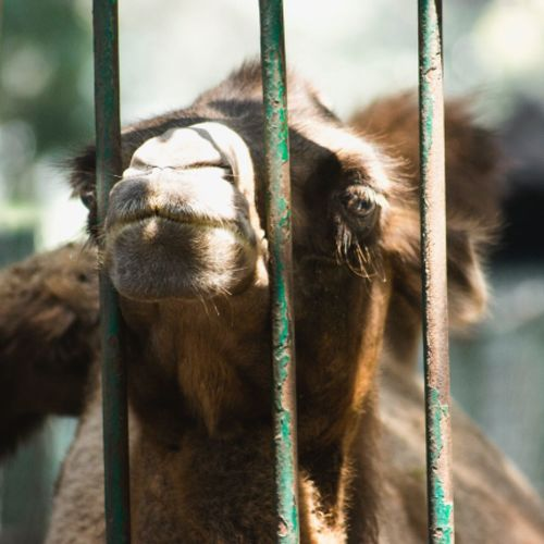 Animal Themes Mammal No People Day Focus On Foreground Cage Monkey Outdoors Close-up Domestic Animals Nature