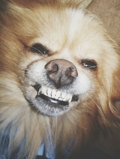 Smiling Cheese! Dog Of The Day Dogstagram Dogsofinstagram Check This Out FUNNY ANIMALS Funny Hello World Funny Pics