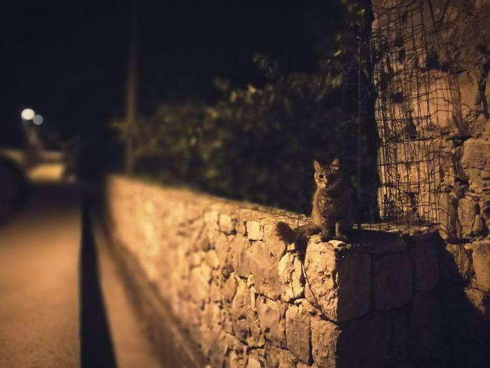 Wall Night Nightphotography Night Photography Night Life Nighttime Animal No People Evening Evening Walk Sitting Stonewall Stone Wall HUAWEI Photo Award: After Dark Animal Themes Sky Cat