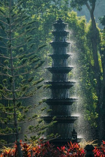 Tirta gangga fountain Plant Tree Growth Nature No People Day Beauty In Nature Shadow Built Structure Flowering Plant Architecture Tranquility Land Scenics - Nature Leaf Green Color Sunlight Outdoors Flower Plant Part