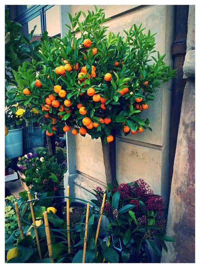 Orange Arancione Arancia Italia Italy MyPhotography Details Relaxing Hello World Colors