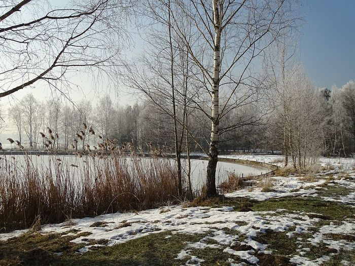 Frozen river amidst bare trees during winter