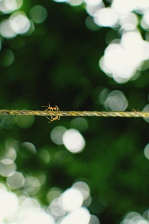 Nature On Your Doorstep The Week On EyeEm Bokeh Ants Ant Golden Leaves Morning One Animal Defocused Animal Wildlife Nature Animal Outdoors Day No People Animals In The Wild Beauty In Nature City Reptile Tree Animal Themes Close-up UnderSea
