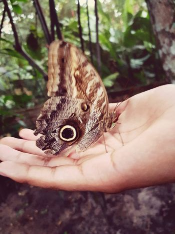mariposa ?¿ Buterfly Bugs Human Body Part Human Hand One Animal One Person Holding Animals In The Wild Animal Wildlife Animal Themes Nature An Eye For Travel