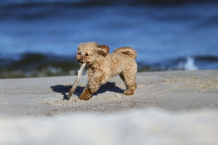 View of dog running on land