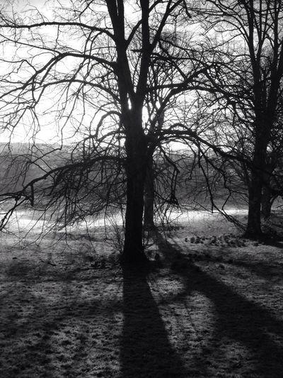 Sunrise Blackandwhite The Press - Treasure Bw_trees