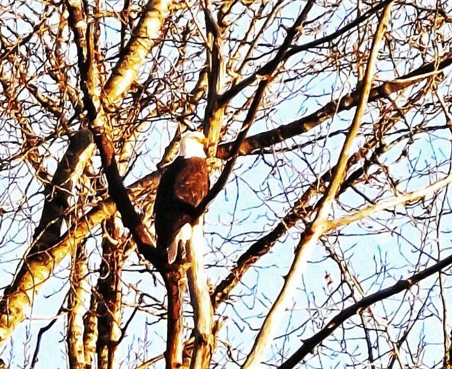 Bird Photography Birds Birdwatching Eagles Eaglepride Eagleview Outdoors Outdoor Photography Landscape_photography Serene Outdoors