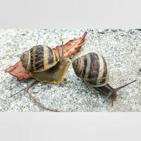 Snails.. 🐌🐌 Snail🐌 Snail Snails Twins Doppio Nature Naturelovers