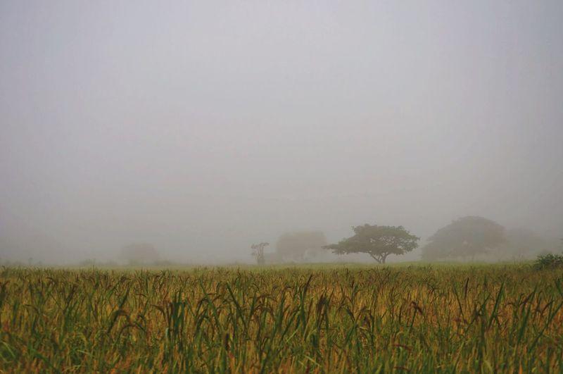 Mist Misty