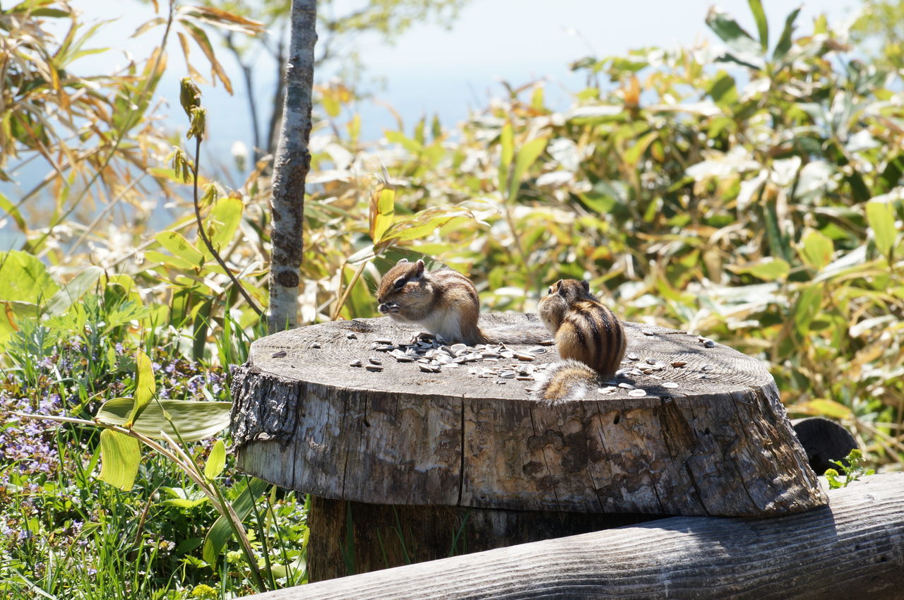 Close-Up Of Squirrels On Wooden Fence