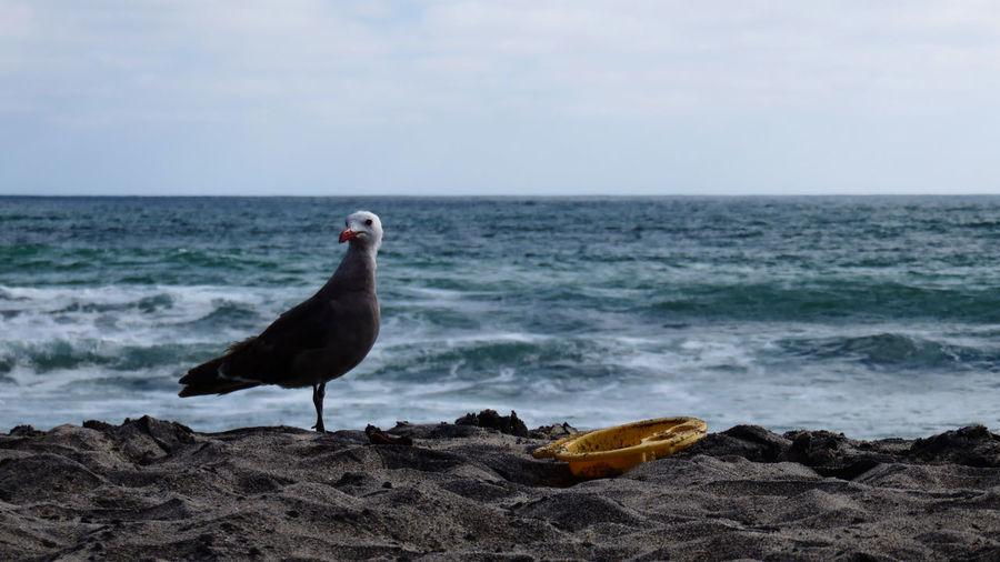 Seagull at beach against sky on sunny day
