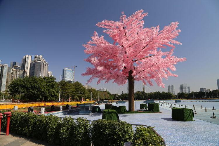 Tree of light,