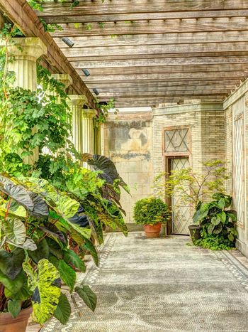 Untermyer Park Architecture Plant Potted Plant Building Exterior Green Fall Beauty Fall The Five Senses PlantYonkers New York Growth Architecture Built Structure Steps Building Exterior Potted Plant Creeper Plant Footpath Day The Way Forward Nature Plant Life Vine Entrance Outdoors Green