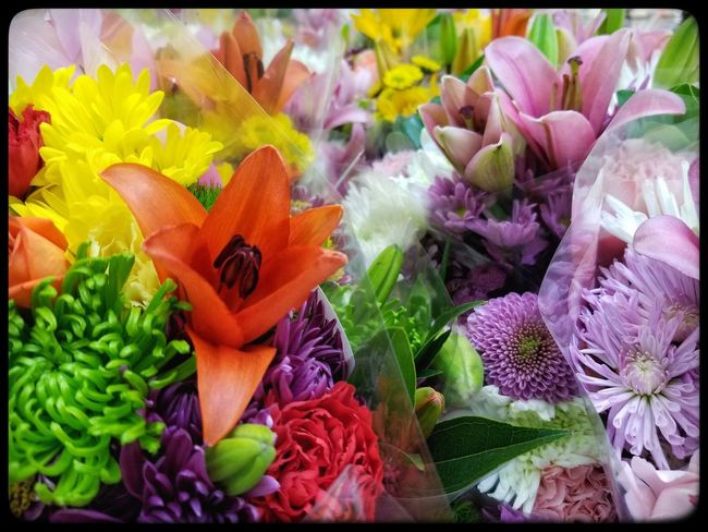 Freshness Variation Flower No People Close-up Healthy Eating Food