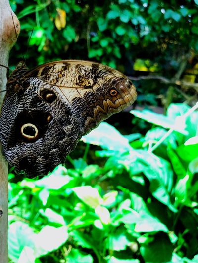 Didn't think of it until now but their wings looks like different animals. Selectedtagwasreptile?? Reptile Animals In The Wild Animal Themes One Animal Wildlife Close-up Outdoors