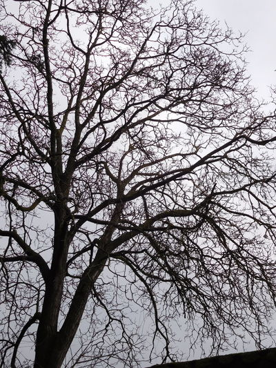 Black And Grey Colour January Weather Bare Tree Beauty In Nature Branch Clear Sky Clouds And Sky Day Flower Freshness Low Angle View Nature No People Outdoors Rural Scene Sad Scenics Sky Tranquility Tree Trees Magic