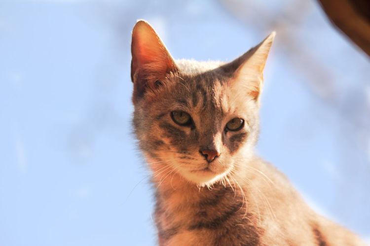 Animal Photography Cat Curiosity One Animal Pets Portrait Travel Photography