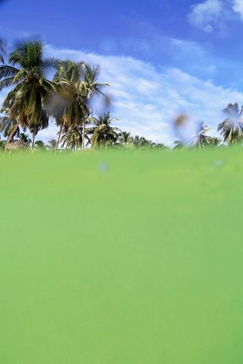 Drowning Beauty In Nature Cloud - Sky Day Field Grass Green Color Growth Low Angle View Nature No People Ocean Outdoors Palm Tree Popping Up Rural Scene Scenics Sea Level Sky Tranquil Scene Tranquility Tree