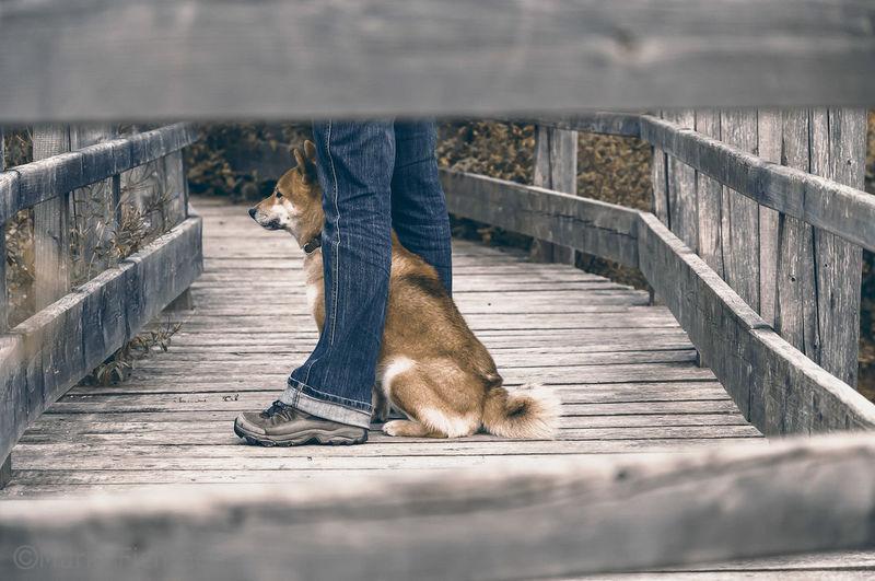 Dog sitting between legs of man