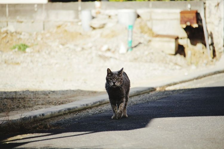 Domestic Cat Feline Street Animal Road Mammal Walking One Animal Pets Domestic Animals Outdoors No People Portrait Water Day Animal Themes