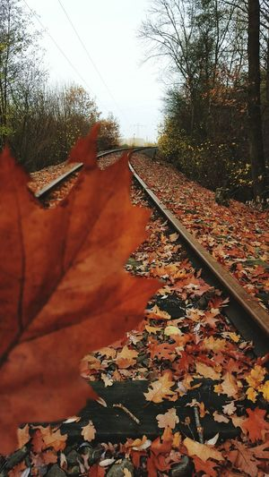 Twillight Learn & Shoot: Leading Lines Leading Lines Train Tracks The Beauty Of Fall Autumn Collection Nature Photography Nature_collection Colorsplash Autumn 2015 Autumn Colors Autumn🍁🍁🍁 Bruchmühlbach-Miesau Colors Of Autumn Macro Beauty