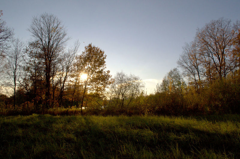 Nature scenery with trees and clear sky